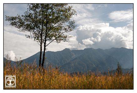 Murnau, Murnauer Moos, marsh, mountains, bavaria, germany