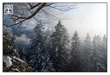 Wald Winter, Bäume Schnee
