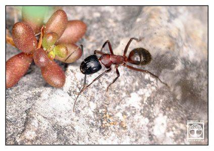 ant macro, ant