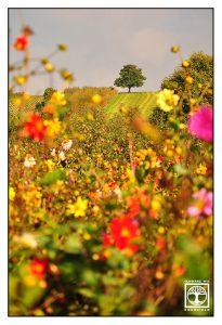 flower meadow, autumn flowers