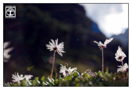 backlight flowers, flower macro