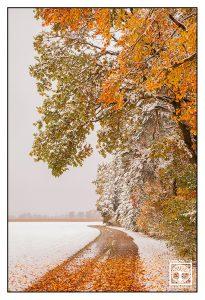 winter way, winter road, autumn road, autumn way, autumn forest, winter forest, snowy forest, allgäu, germany, bavaria
