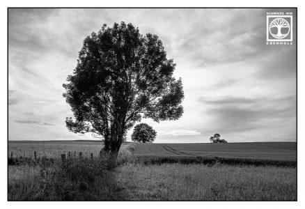 schwarzweissfotografie, schwarzweiss foto, Felder, Feld schwarzweiss