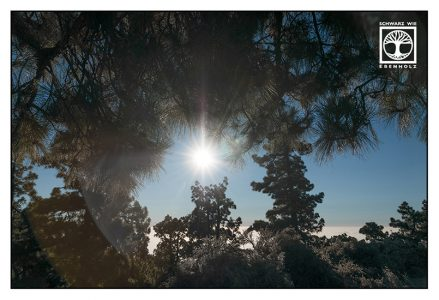 La Palma, Caldera de Taburiente, Caldera, pine forest, silhouette trees photography