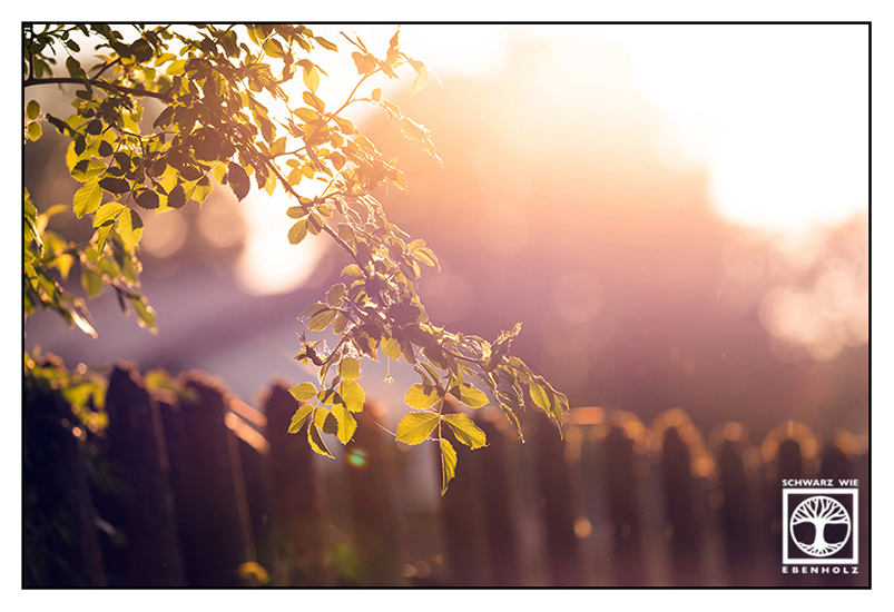 backlight leaves