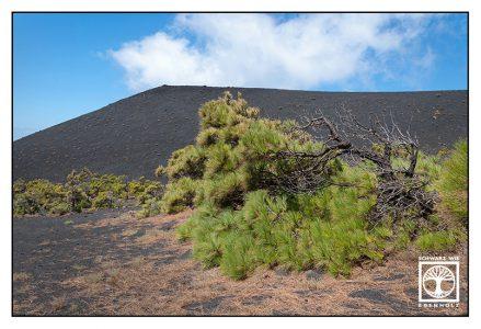 La Palma, Fuencaliente, volcano, volcanic landscape, lonely tree