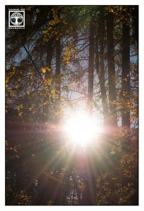 autumn forest, backlight forest