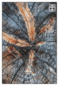 abstract photo, abstract photography, wood texture