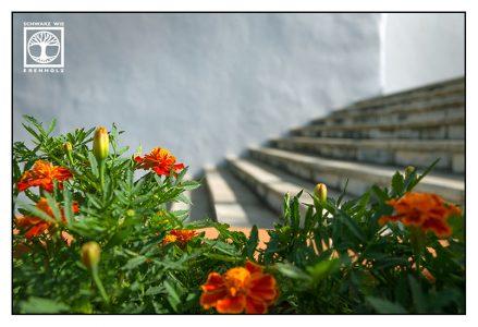 stairs, orange flowers, orange flower, san andres, la palma