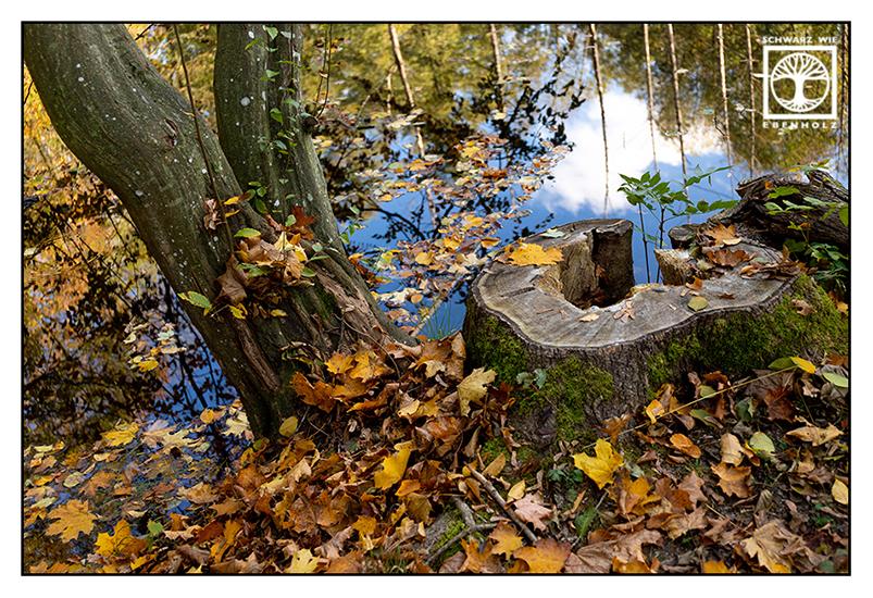 autumn trees, autumn leaves autumn lake