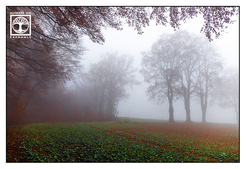 foggy forest, fog forest, autumn forest, foggy fields, fog fields