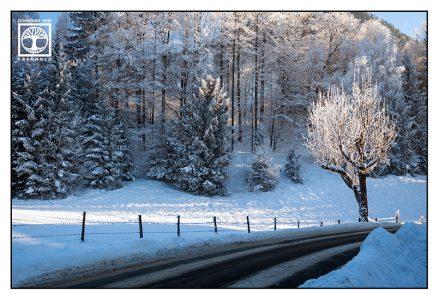 winter tree, winter road, winter forest, snowy tree, bavaria, germany