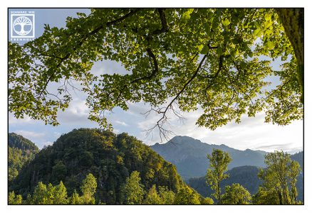 mountains forest, summer forest, Kochel
