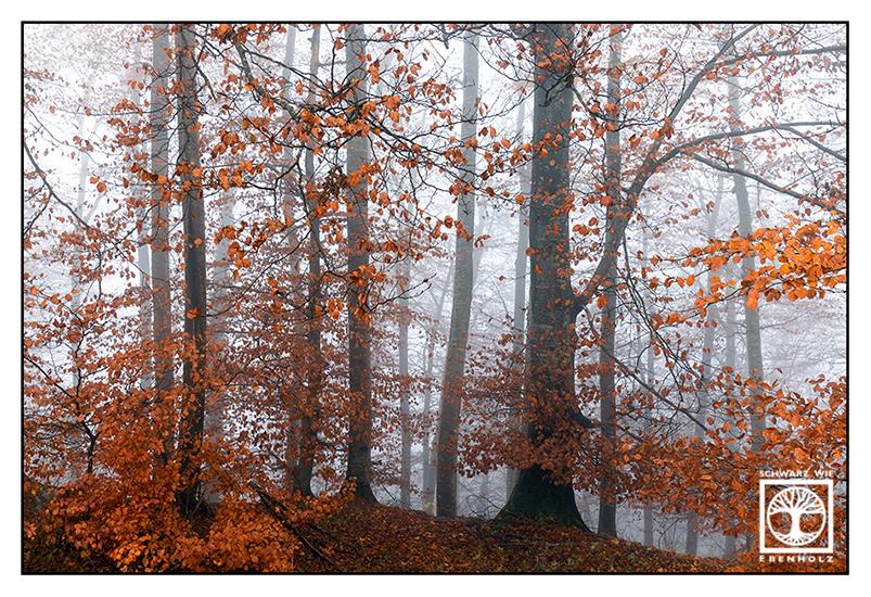 foggy forest, fog, autumn forest, autumn trees, orange leaves, autumn leaves