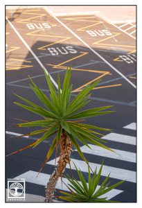 abstract photo, abstract photography, palms, lines photo, lines photography, la palma, tazacorte, point line area photography