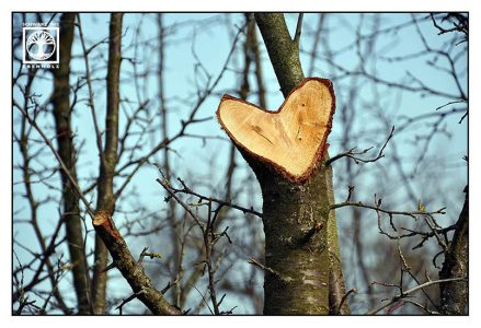 heart photo, love photo