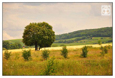 Flonheim, Palatinate, Rhineland, Pfalz, Germany