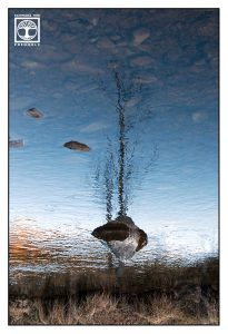 surreal photo, surrealism, surreal photography, reflections, reflections water