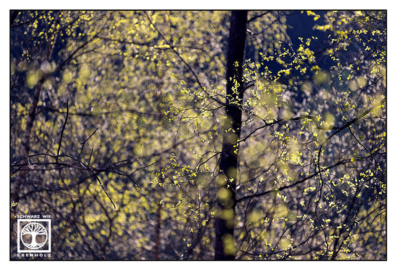 spring, springtime, fresh green, young leaves, tree spring