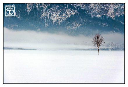 lonely tree, winter tree, winter landscape, foggy winter, Germany