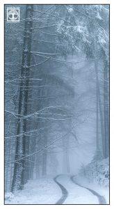 Wald Winter, Pfälzer Wald Winter, Bäume Schnee, Bäume Winter, Nebel Winter, nebel winter wald, Waldweg winter, Waldweg nebel