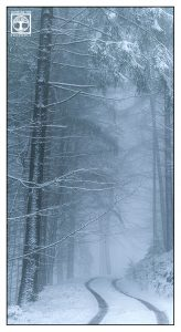 winter forest, winter trees, snowy trees, winter fog, foggy forest, winter road, Palatine forest, Pfalz, Germany