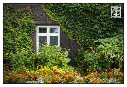 fenster blumen, blumengarten, Kopenhagen, Dänemark