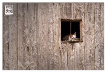 cat window, cat barn