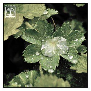 waterdrop macro, droplet macro, grene leaf macro