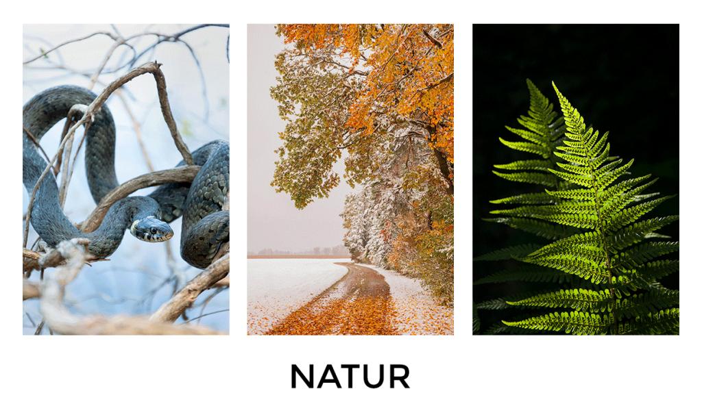 natur fotografie, naturfotografie, naturfotos, landschaft fotografie, Portfolio